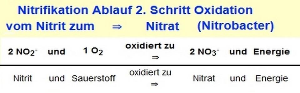 was ist nitrit